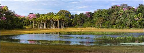 Pantanal 20