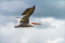 Oiseaux 01