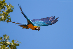 Oiseaux 03